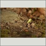 Bild 8 zum Bildarchiv Sonstige Pflanzen
