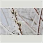 Bild 2 zum Bildarchiv Sonstige Pflanzen