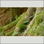 Bild 49 zum Bildarchiv Sonstige Pflanzen