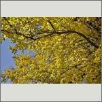 Bild 33 zum Bildarchiv Sonstige Pflanzen