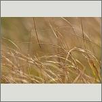 Bild 36 zum Bildarchiv Sonstige Pflanzen