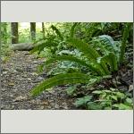 Bild 37 zum Bildarchiv Sonstige Pflanzen