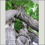 Bild 42 zum Bildarchiv Sonstige Pflanzen