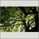 Bild 44 zum Bildarchiv Sonstige Pflanzen