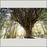 Bild 46 zum Bildarchiv Sonstige Pflanzen