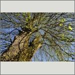 Bild 47 zum Bildarchiv Sonstige Pflanzen