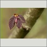 Bild 41 zum Bildarchiv Sonstige Pflanzen