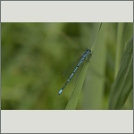 Bild 121 zum Bildarchiv Libellen