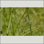 Bild 18 zum Bildarchiv Libellen
