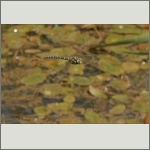 Bild 141 zum Bildarchiv Libellen