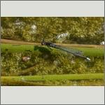 Bild 156 zum Bildarchiv Libellen
