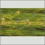 Bild 196 zum Bildarchiv Libellen
