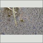 Bild 210 zum Bildarchiv Libellen