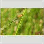 Bild 3 zum Bildarchiv Libellen