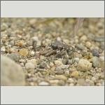 Bild 7 zum Bildarchiv Käfer