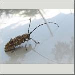 Bild 3 zum Bildarchiv Käfer