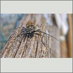 Bild 1 zum Bildarchiv Käfer