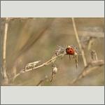 Bild 9 zum Bildarchiv Käfer