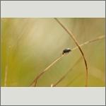 Bild 10 zum Bildarchiv Käfer