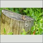Bild 7 zum Bildarchiv Reptilien