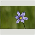 Bild 45 zum Bildarchiv Sonstige Blüten
