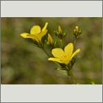 Bild 48 zum Bildarchiv Sonstige Blüten