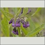 Bild 72 zum Bildarchiv Sonstige Blüten