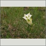 Bild 46 zum Bildarchiv Sonstige Blüten