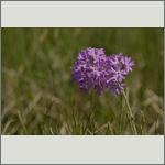 Bild 43 zum Bildarchiv Sonstige Blüten