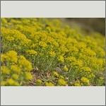 Bild 23 zum Bildarchiv Sonstige Blüten