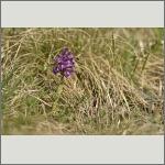 Bild 6 zum Bildarchiv Blüten Orchideen