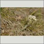 Bild 52 zum Bildarchiv Sonstige Blüten