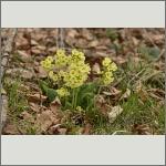 Bild 37 zum Bildarchiv Sonstige Blüten