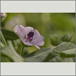 Bild 17 zum Bildarchiv Sonstige Blüten