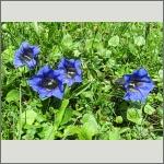 Bild 32 zum Bildarchiv Sonstige Blüten