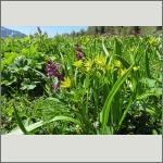 Bild 15 zum Bildarchiv Sonstige Blüten