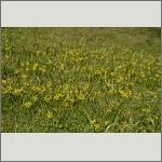Bild 11 zum Bildarchiv Sonstige Blüten