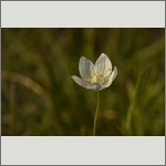 Bild 7 zum Bildarchiv Sonstige Blüten