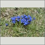 Bild 26 zum Bildarchiv Sonstige Blüten