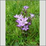 Bild 22 zum Bildarchiv Sonstige Blüten