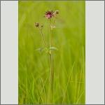 Bild 3 zum Bildarchiv Sonstige Blüten