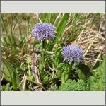 Bild 152 zum Bildarchiv Sonstige Blüten