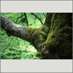 Bild 82 zum Bildarchiv Sonstige Pflanzen