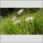 Bild 8 zum Bildarchiv Sonstige Blüten