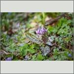 Bild 12 zum Bildarchiv Sonstige Blüten