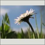 Bild 173 zum Bildarchiv Sonstige Blüten