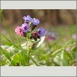 Bild 158 zum Bildarchiv Sonstige Blüten