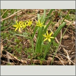 Bild 159 zum Bildarchiv Sonstige Blüten