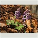 Bild 160 zum Bildarchiv Sonstige Blüten