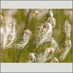 Bild 47 zum Bildarchiv Früchte/Samen